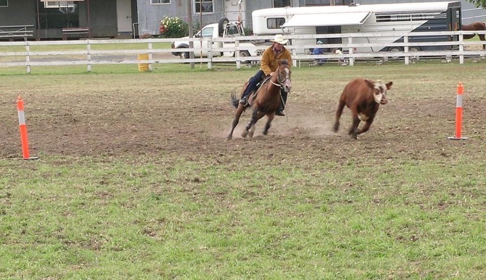 Judgement on liability shows horse sense